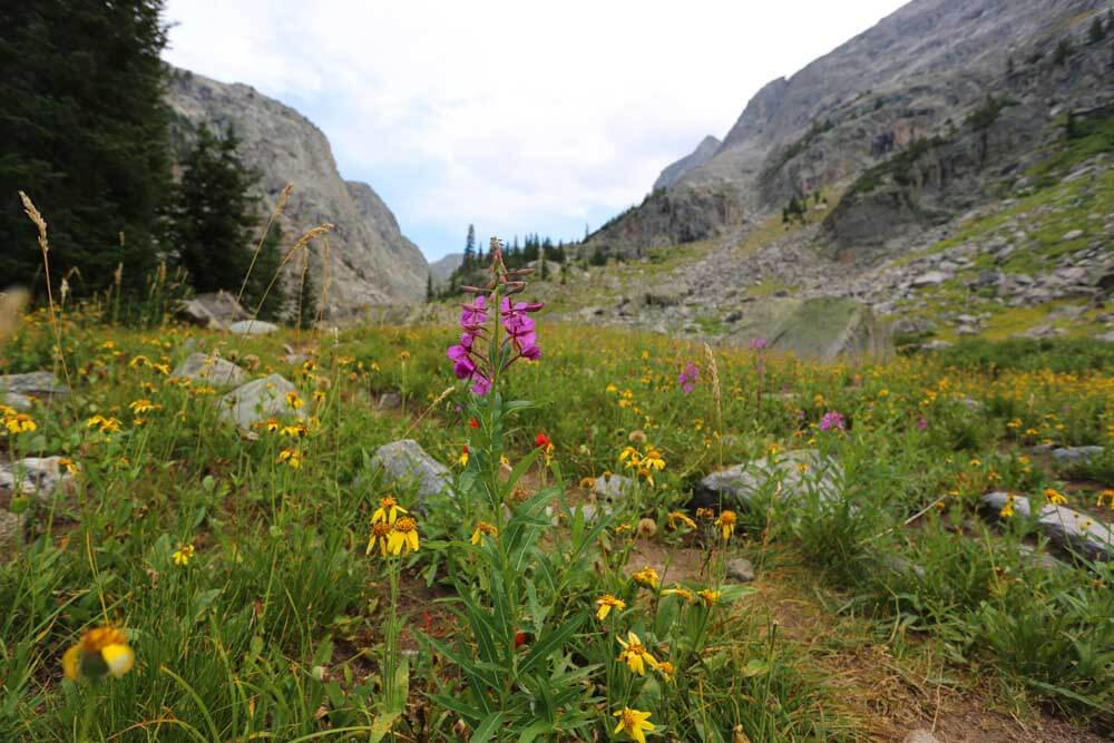 Wildflowers on the trail to Cube Rock Pass