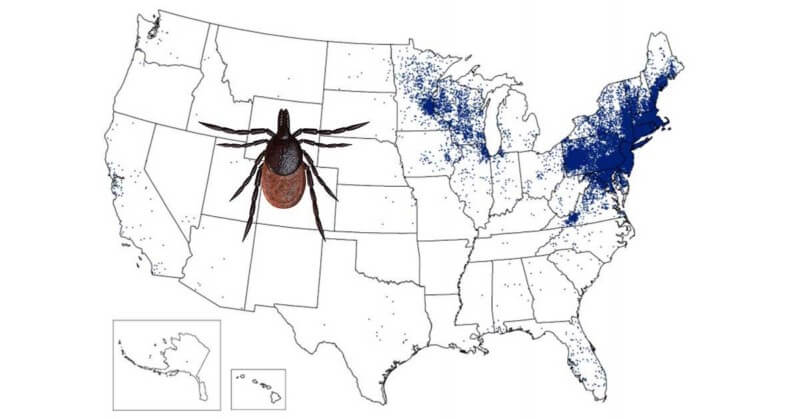 2015-cdc-lyme-map-tick-2